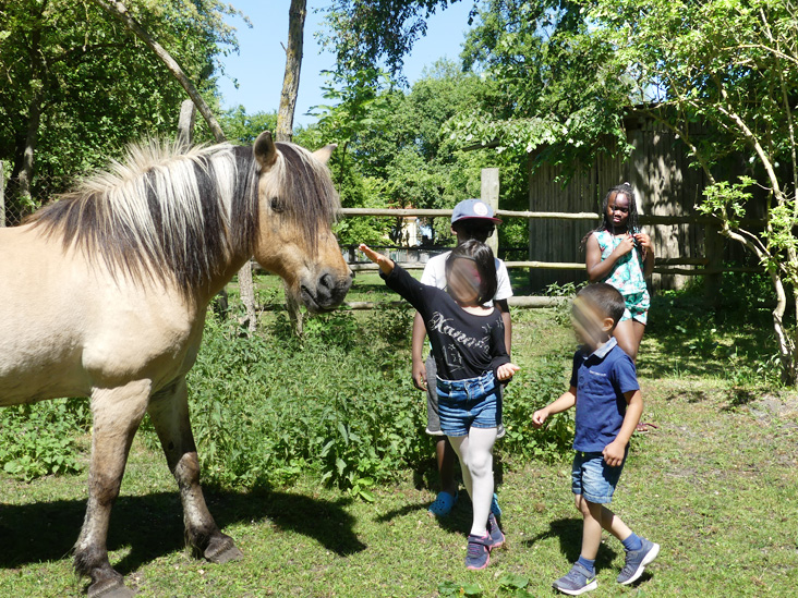 Pferd streicheln am Familientag