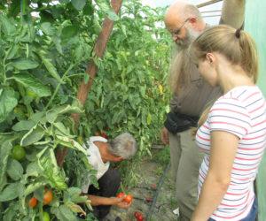 Tomatenplantage-Moldawien